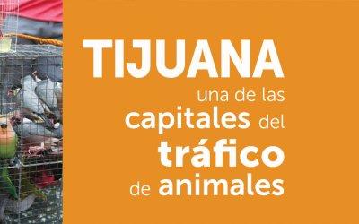 Tijuana una de las capitales del tráfico de animales